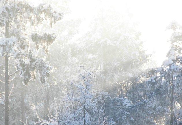 Zon over een winterlandschap