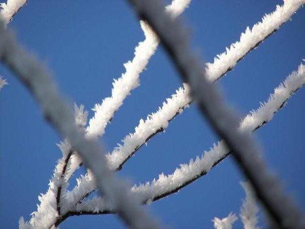 Sneeuwkristallen op de takken
