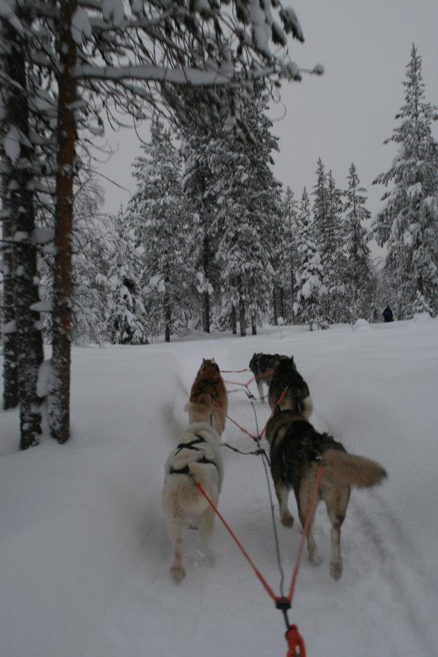 Huskeytocht door de sneeuw