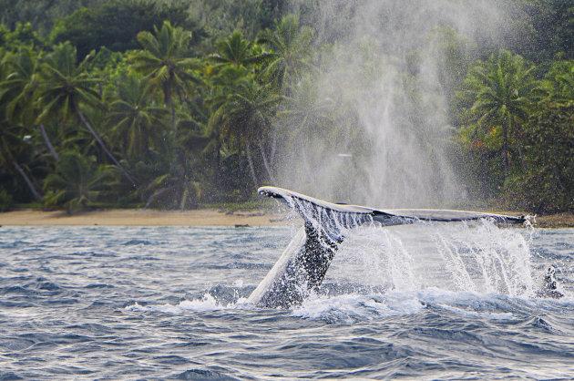 walvis spotten