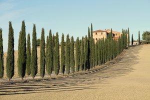 schaduwspel met cypressen