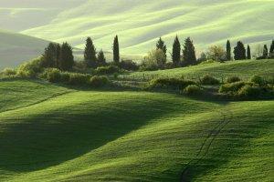 Groen golvend landschap in strijklicht