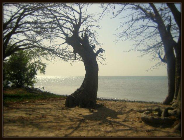 Als bomen konden praten.........