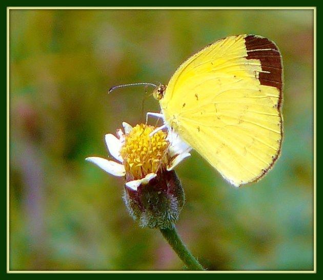 Op vlinderjacht