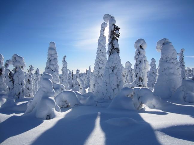 Winterwonderland in salla (ruuhitunturi)