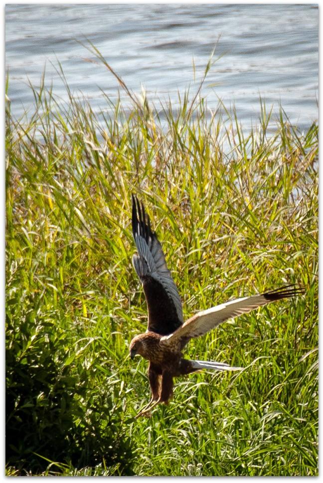 Landing of aanval