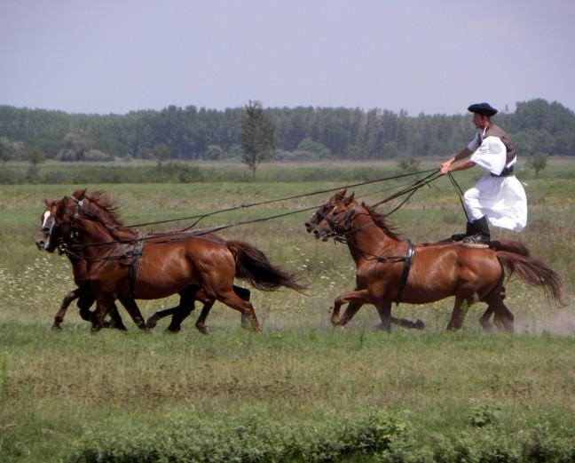 Bugacpuszta (paardemennen)