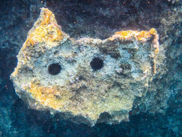 Onderwaterkat