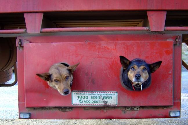Doggy Transport...