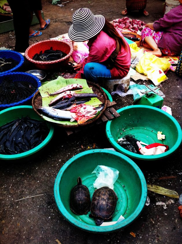 Vis en schildpad op de markt in Battambang