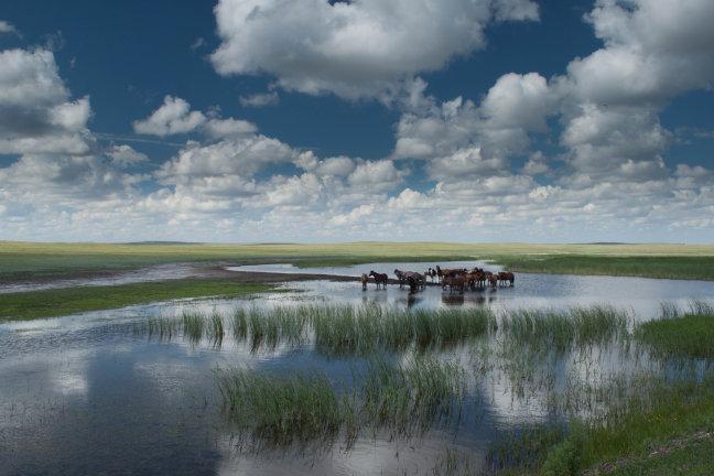 Kazachstaanse leegte