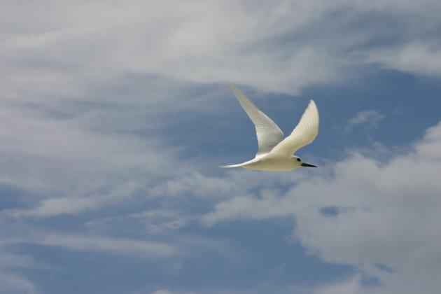Vogel in paradijs