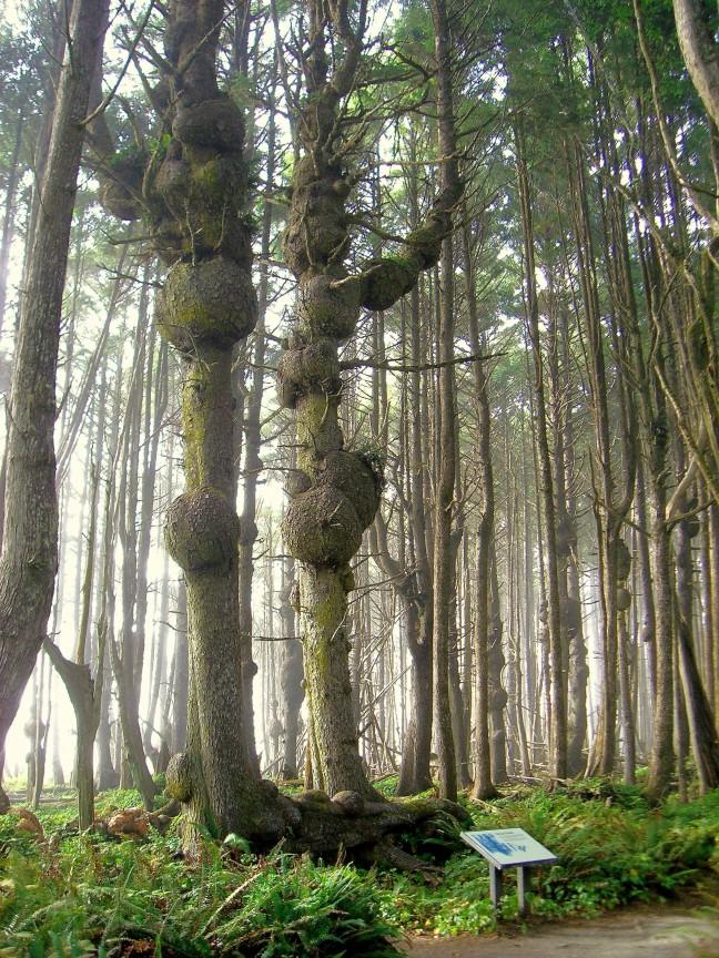 Regenwoud in Olympic State Park