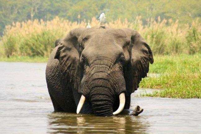 Schitterende bootsafari Liwonde NP Malawi