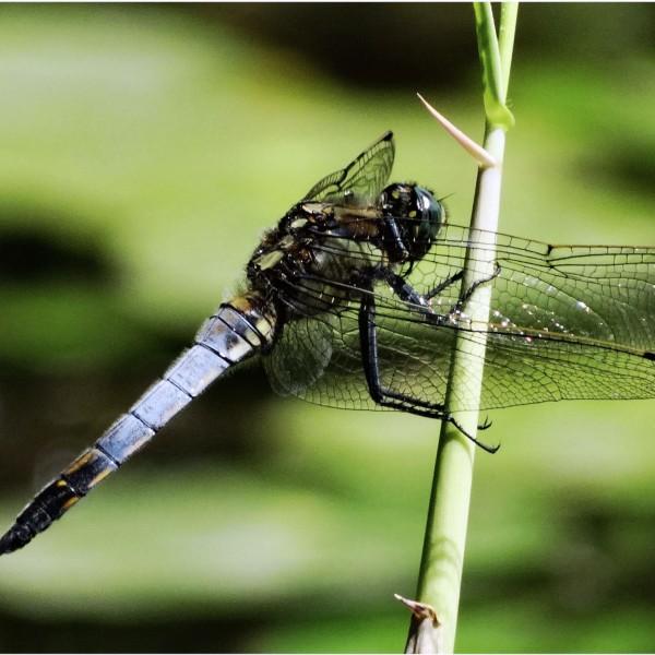 '396356' door Dragonfly