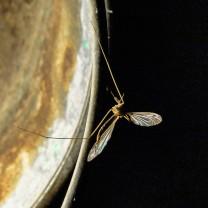'397094' door Dragonfly