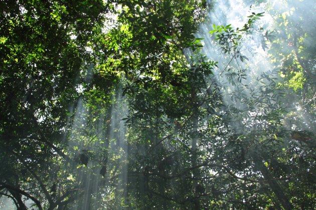 Zonnestralen door het jungle-dek