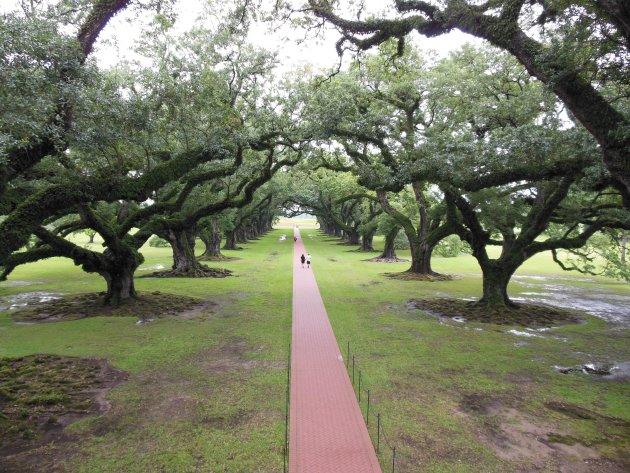 Het pad van Oak Alley die naar de Mississippi leidt