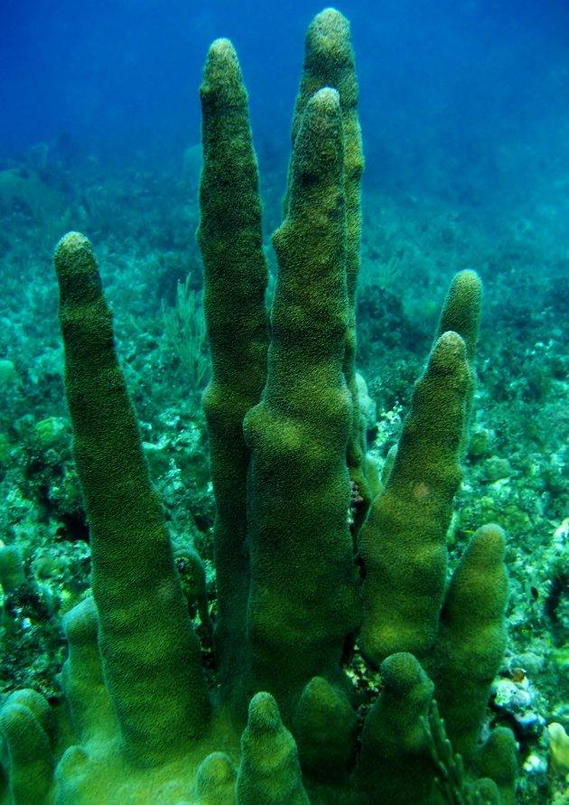 Onderwaterflora