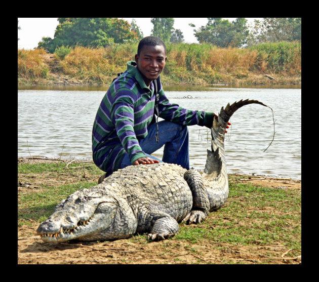 Heilige krokodillen