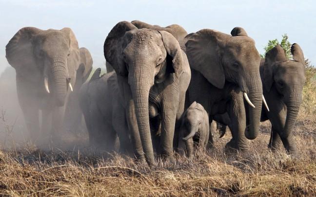 Stof en olifanten