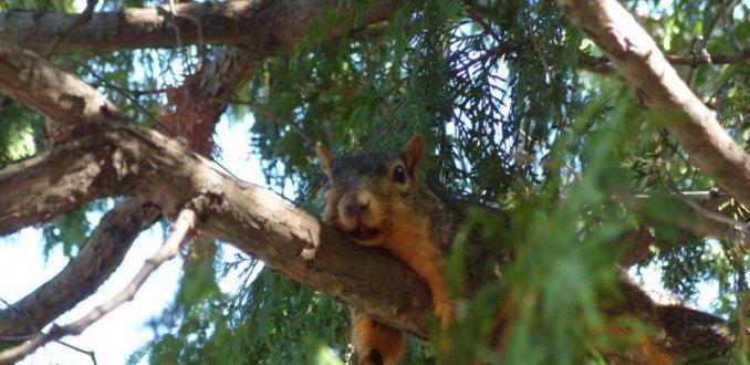 Luierende eekhoorn