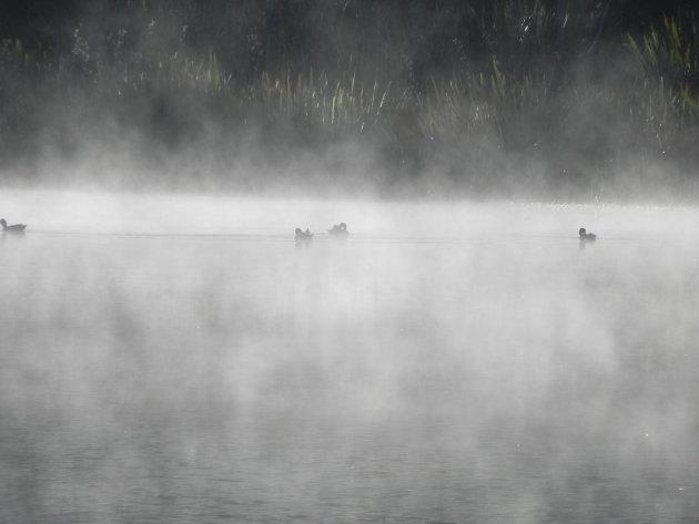 Eendjes in de mist