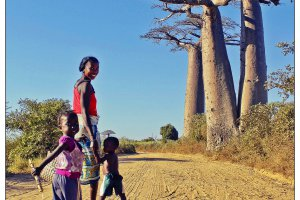 Drie Baobabs
