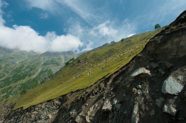 Kashmir weidegrond