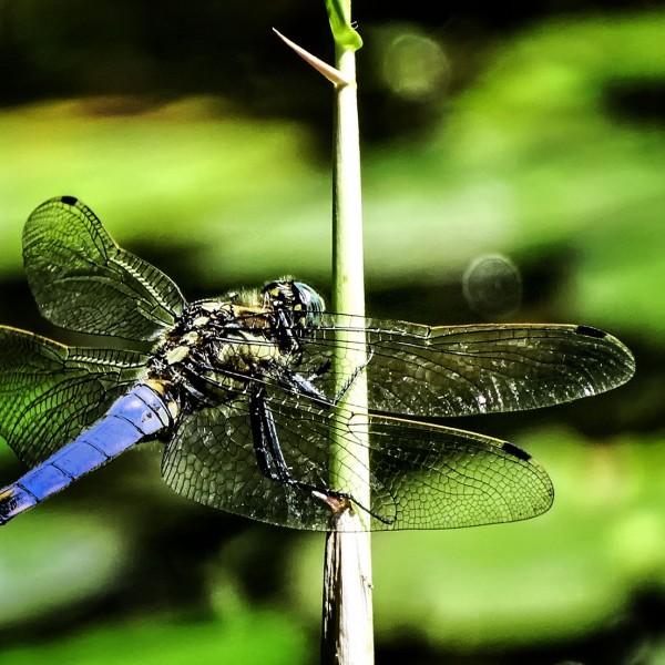 '408474' door Dragonfly