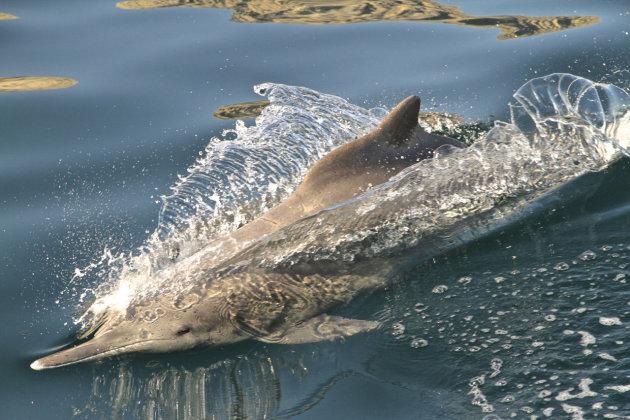 Dolfijnen naast de boot!!