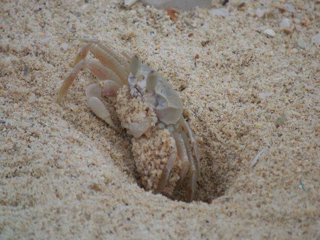 een krab die een holletje graaft