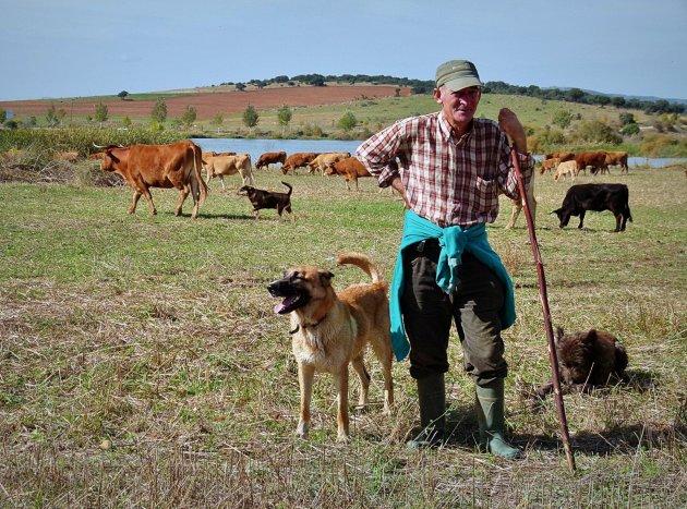 Kudde met herder(s)