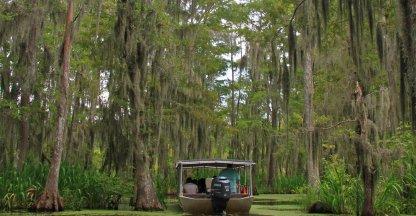 Swamptour