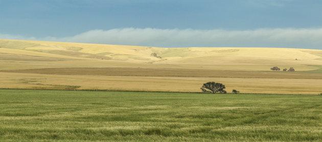 Landschap Zuid Australie
