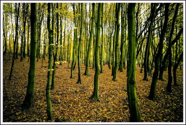 groen in de herfst