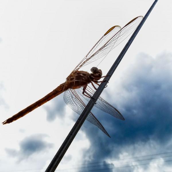 '415289' door Dragonfly
