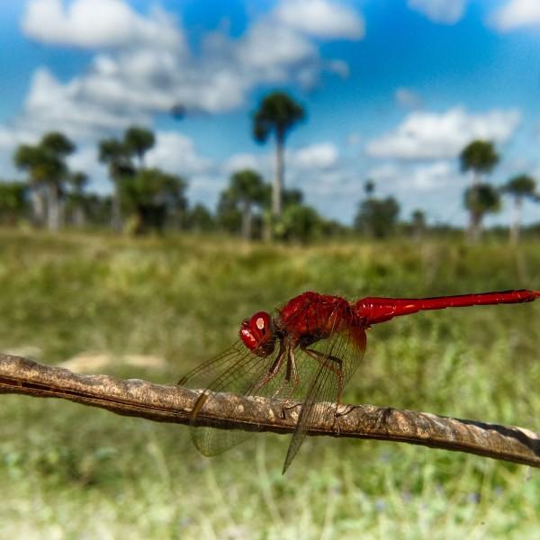 '415863' door Dragonfly