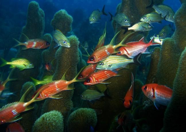 Zowel boven als onderwater erg kleurig