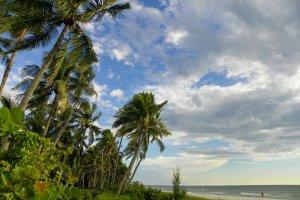 Strand van Naples, west Florida