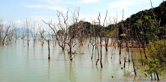 Bomen in het water