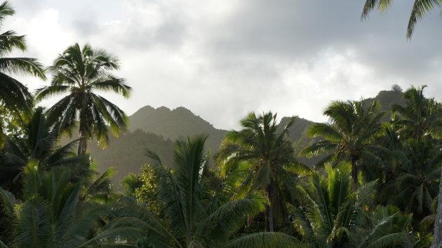 Jungle van Rarotonga