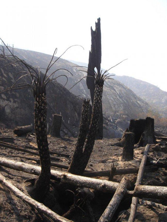 bosbrand op Mount Mulanje