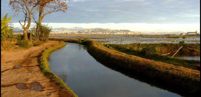 Wandelen tussen de rijstvelden.