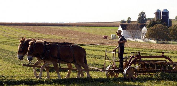 Amish Jongen
