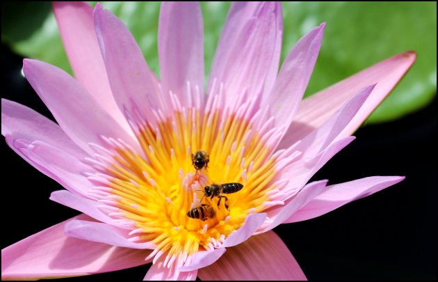 Bijen bijeen