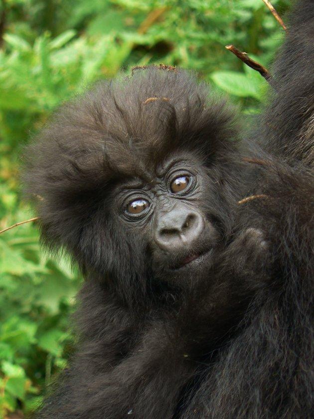 In de bush van Rwanda.