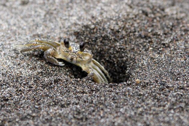 Strand krabbetje
