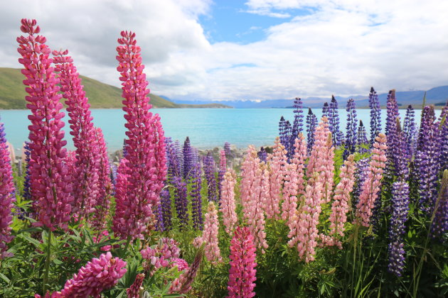 Lake Tekapo, Zuidereiland