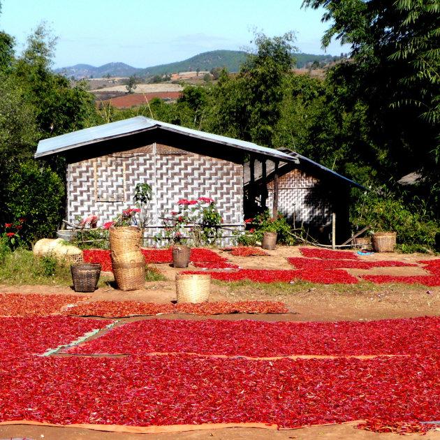 Peper oogst